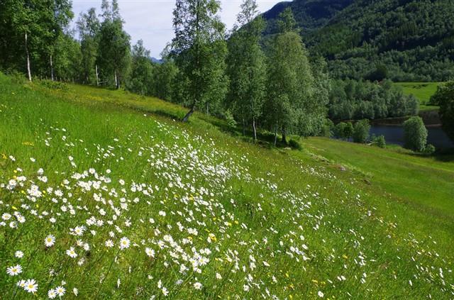 Sykkylven kommune shared a link
